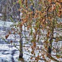 ....а за окном то снег, то дождь.... :: Светлана Игнатьева