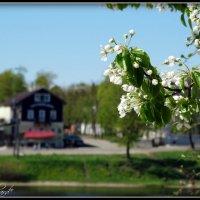 Майское цветение...Псков. :: Fededuard Винтанюк