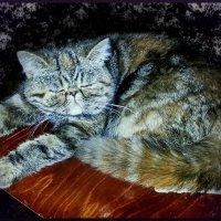 Кошкам тоже снятся сны... :: Людмила Богданова (Скачко)
