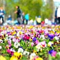 Первые цветы :: Дмитрий Боргер