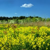 Заброшенное поле :: Валерий Талашов