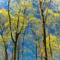 Майская зелень :: Анна Никонорова