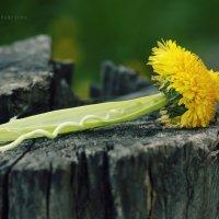Чудо природы :: Вера Шамраева