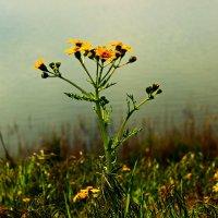 Один в поле... :: Nataliya Oleinik