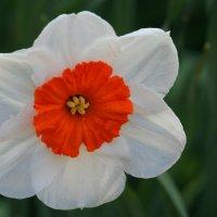 Цветущий май :: lady-viola2014 -