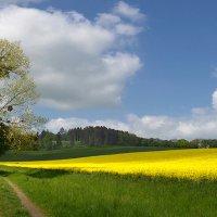 Весенний колорит :: Boris Alabugin