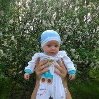 Любимый сынок :: Елена Харитонова
