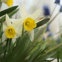 весенние цветы :: Михаил Фролов