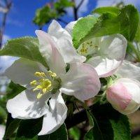 Весна :: Vladimir Denisov