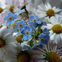 Цветы :: Наталья (Nata-Cygan) Цыганова