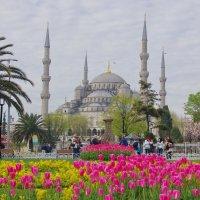 Голубая мечеть. :: Ирина Нафаня