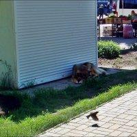 Две собаки, воробей и много чего ещё... :: Нина Корешкова