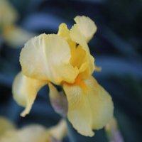 Цветочный хоровод-3. :: Руслан Грицунь