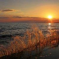 Золотые брызги заката :: Нилла Шарафан