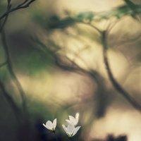 ..призрачный лес.. :: Галина Юняева