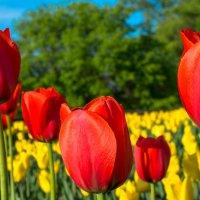 Яркие краски весны. :: Олег Козлов