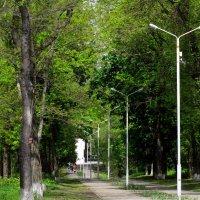 Аллея в майском парке... :: Тамара (st.tamara)