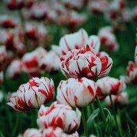 Цветы :: Яна Костюкова