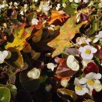 Осенние краски :: Денис Масленников