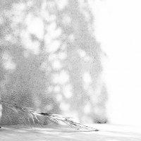 Пальмовая метла. :: Екатерина Сейба