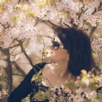 Сакура цветет :: Анна Олейник