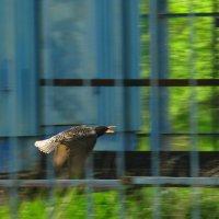 Спрячь за высоким забором... :: Владимир Насыпаный