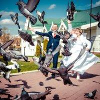 голуби :: Аndrew Theodoroff