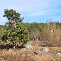 Дерево :: Lera Morozova