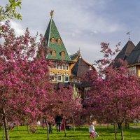 Яблоневый сад :: Игорь Егоров