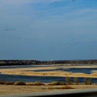 Миграция птиц у Свияжска :: Alexandr Яковлев