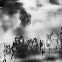 Вдруг выходит из тумана... :: Лиля Ахвердян