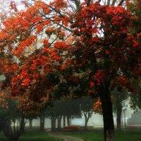 Рыжая осень :: Анна Куценко