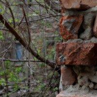 руины.. :: Татьяна Кретова