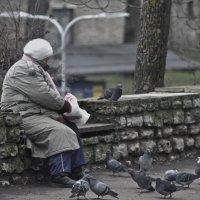Кормление голубей :: shvlad