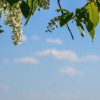 весна :: Татьяна Ларина