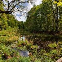 Лесное  озерцо. :: Валера39 Василевский.