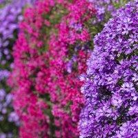 Цветастые цветы :: Вадим Вайс