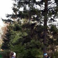 Догоняй!!! :: Наталья Тимофеева