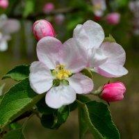 Весна :: Аня Бондаренко