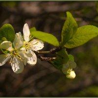 Весна :: Ирина ***