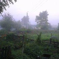 Туман в огородах :: Милла Корн