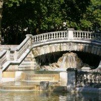 В городском парке... :: Алёна Савина