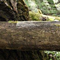 Узоры на поваленном дереве. :: Валерия Комова