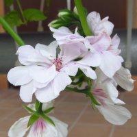 Городские цветы :: Yulia Sherstyuk