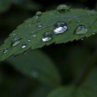 После дождя :: Александра Липчук