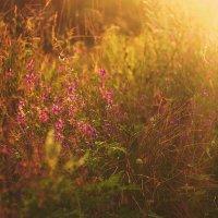 В лучах закатного светила :: Олеся Стоцкая