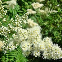 Пышное цветение :: Лидия (naum.lidiya)