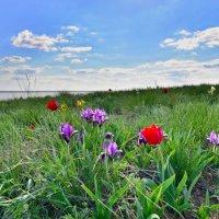 цветы в степи :: Petr Popov