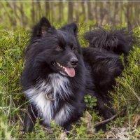 This is my dog :: Андрей Дворников