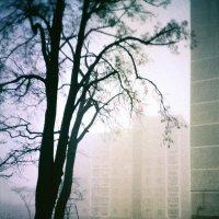 Туманный двор :: Сергей Тарабара
